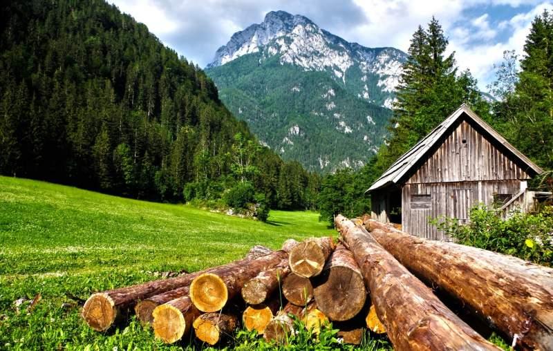 brown-logs-on-grass-field
